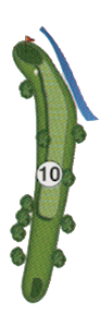 golfholes_10