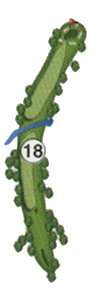 golfholes_18